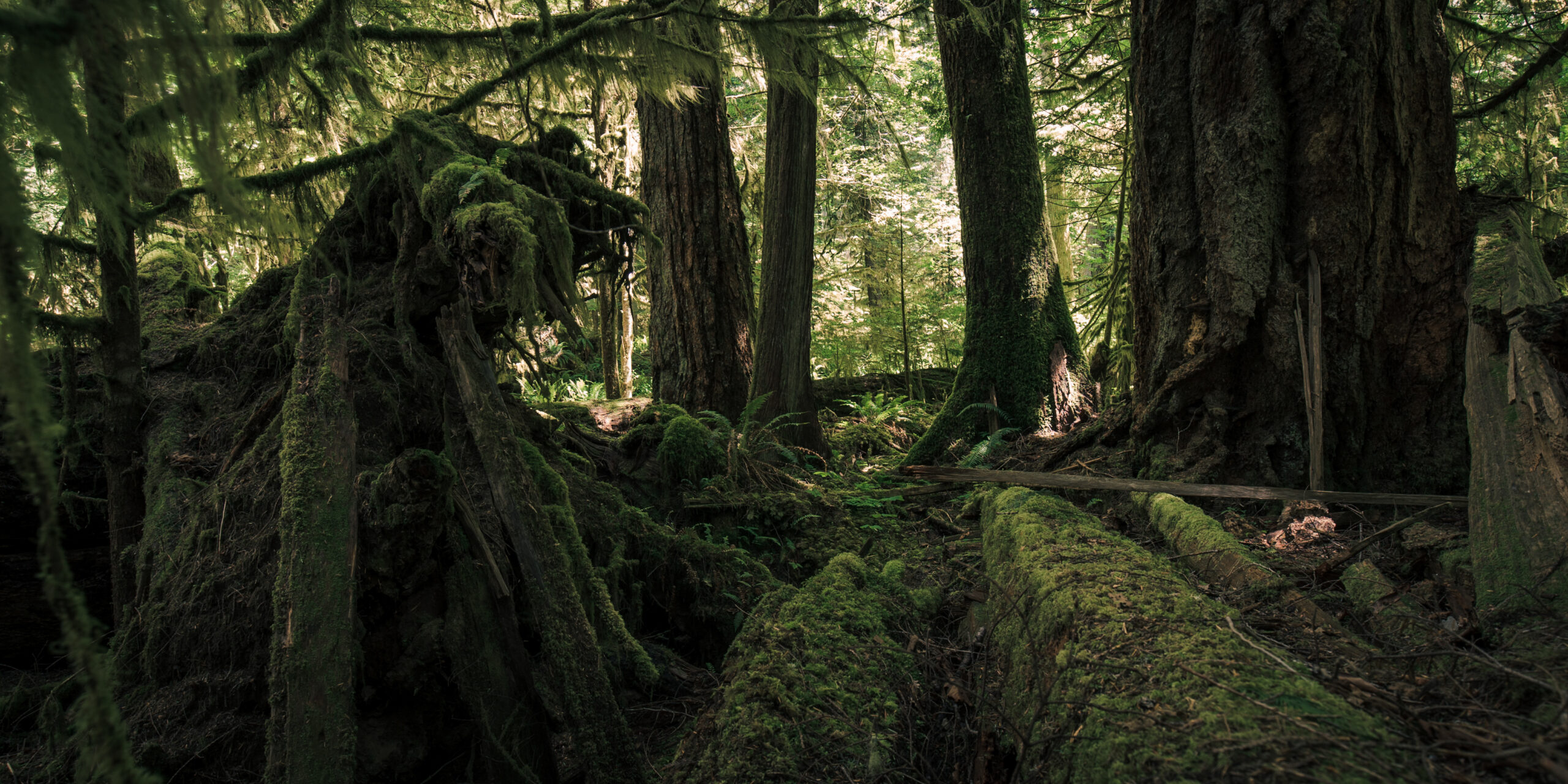 Lush Forest in Mac Millan Provincial Park